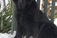 halima-ormedikajal-cani-terranova-3