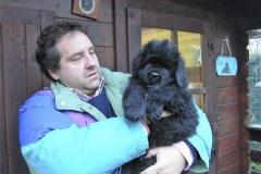 cucciolate-cani-terranova-vecchie-28