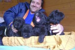 cucciolate-cani-terranova-vecchie-32